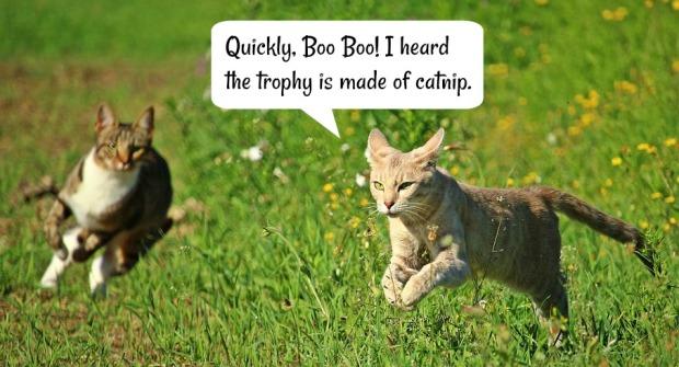Catnip Trophy